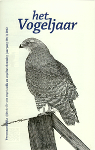 Illustratie: Buizerd, door Ronald Messemaker
